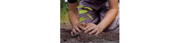 plant a tree image